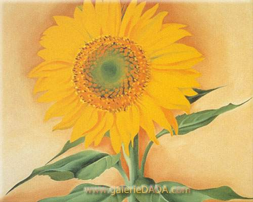 Georgia OKeeffe, A Sunflower from Maggie Fine Art Reproduction Oil Painting