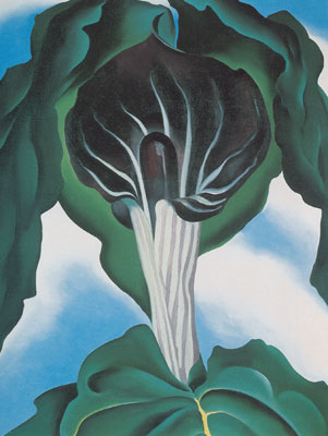 Georgia Okeeffe, Jack-in-the-Pulpit No.3 Fine Art Reproduction Oil Painting