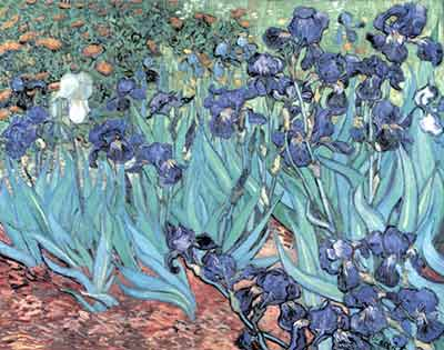 Vincent Van Gogh, Irises Fine Art Reproduction Oil Painting